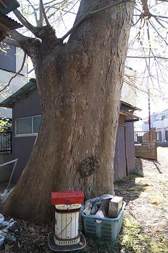 200419彦成香取神社19