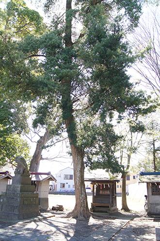 200419彦成香取神社⑨