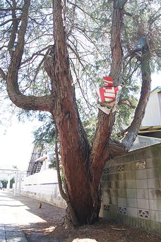 200419彦成香取神社⑫