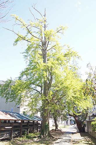 200419彦成香取神社⑬