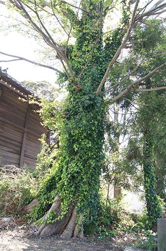 200419彦成香取神社⑮