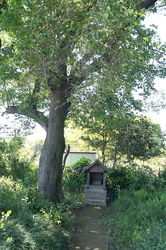 200509宮代胡録神社⑦