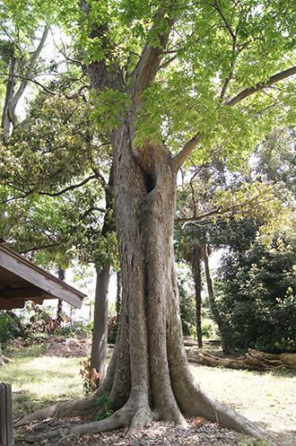 200512向畑香取神社⑦
