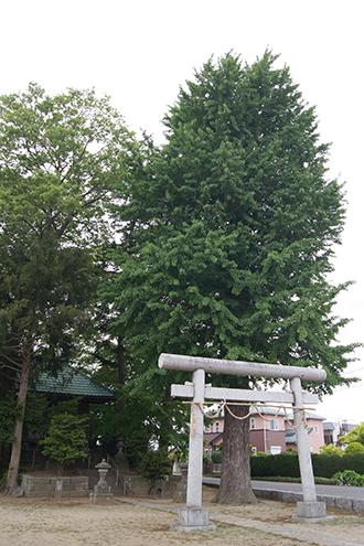 200512上赤岩香取神社銀杏②