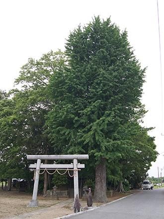 200512上赤岩香取神社銀杏④