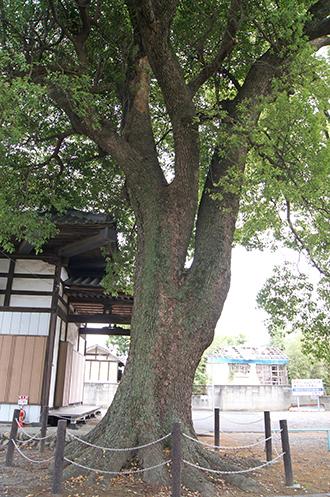 200526本庄 宝輪寺⑥