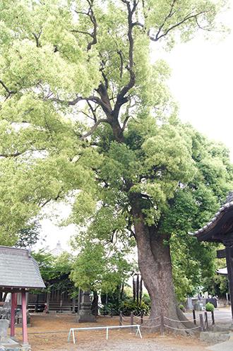 200526本庄 宝輪寺⑦