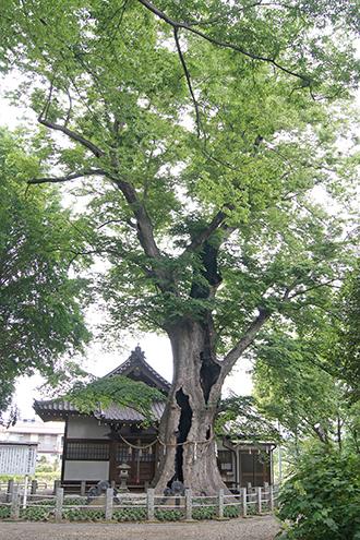 200526城山稲荷神社①
