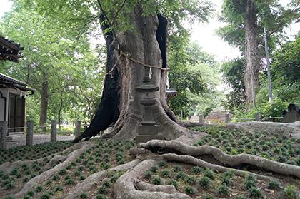200526城山稲荷神社⑦