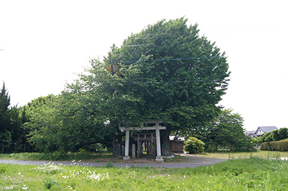 200515堂城稲荷銀杏②