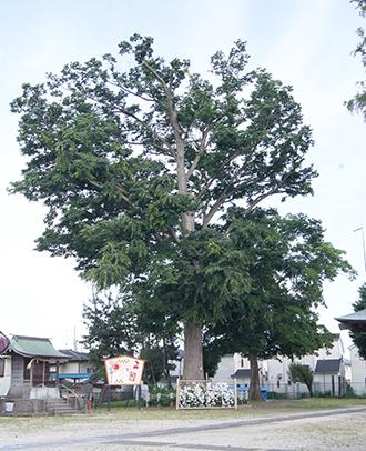 200602藤塚香取神社④