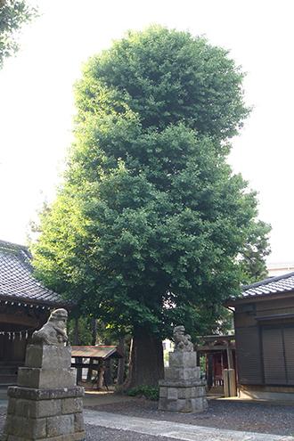 200602元新宿八幡神社①
