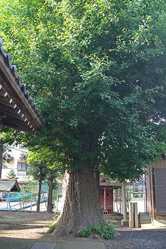 200602元新宿八幡神社②