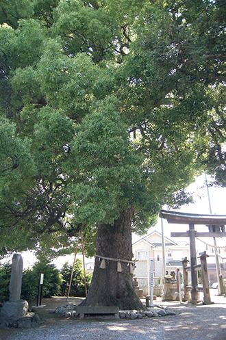 200607千代田金鑚神社①