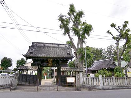 200618佐間天神社欅⑦