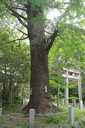 200618忍諏訪神社①