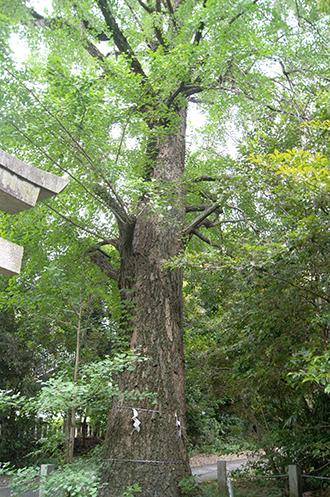 200618忍諏訪神社②
