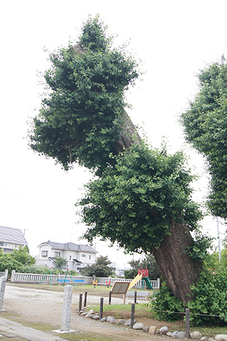 200618真名板薬師堂