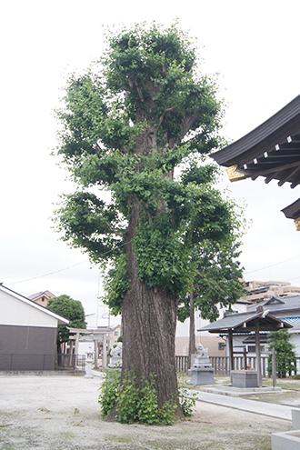 200621上間久里香取神社②