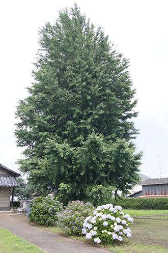 200621稲子諏訪神社①