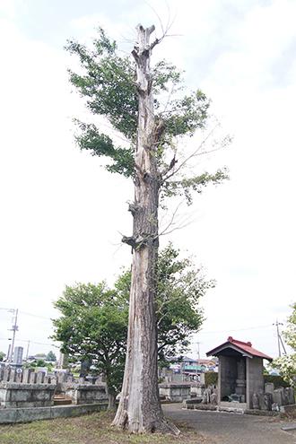 200621稲子諏訪神社⑥