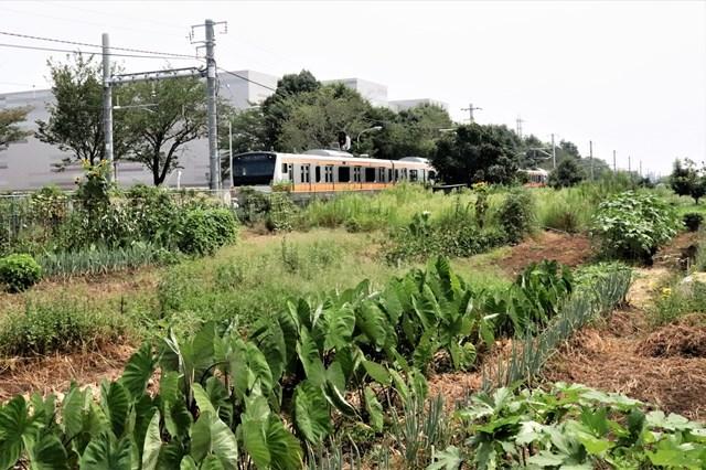 ④秋川~武蔵引田