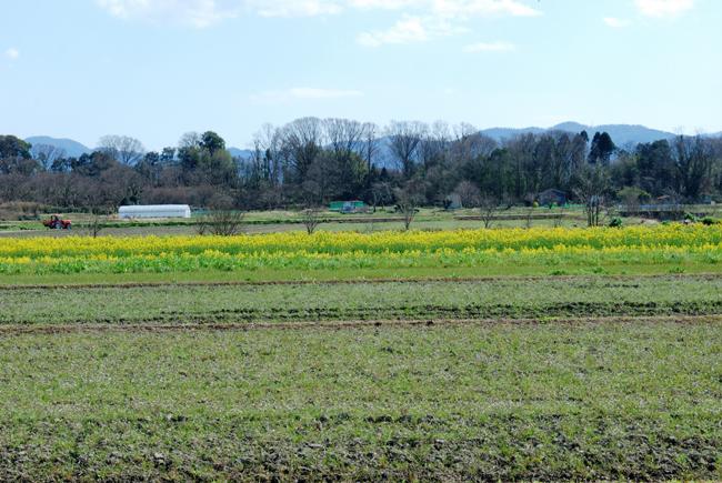 harunohi2.jpg