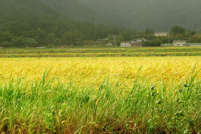 harvesttime6.jpg
