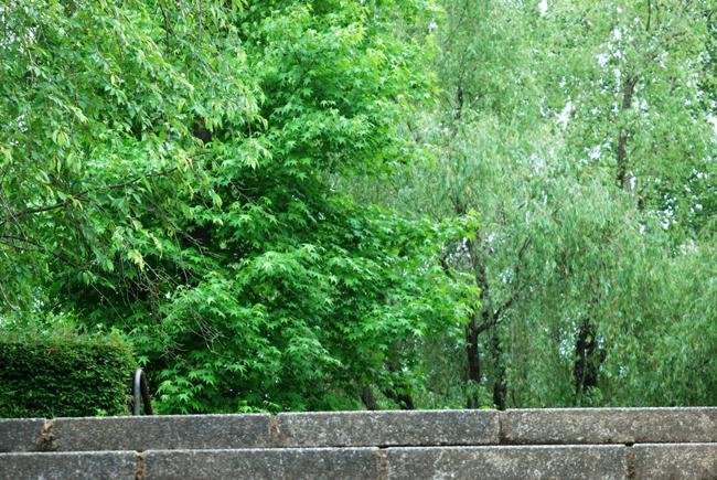 rainpark1.jpg