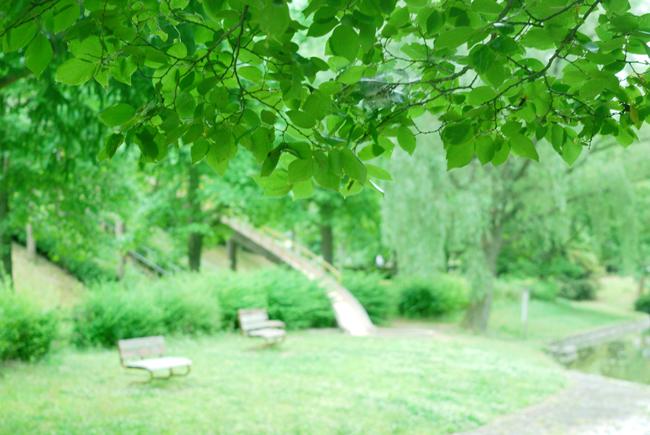 rainpark4.jpg