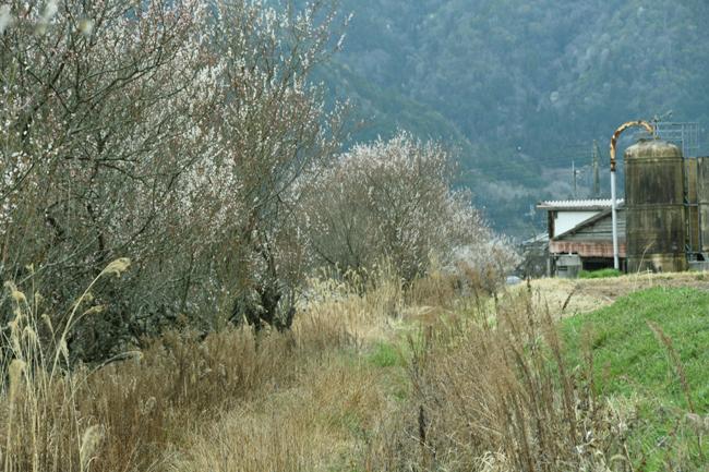 sasaysuis5.jpg