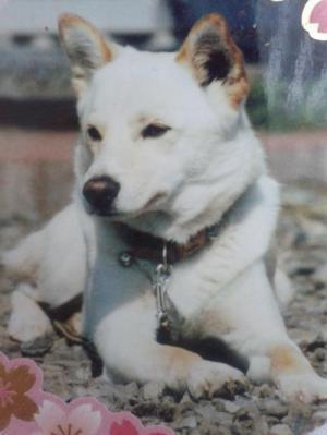 Dog_convert_20210302150351_convert_20210302150446.jpg