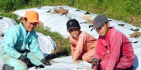 生姜の草取り