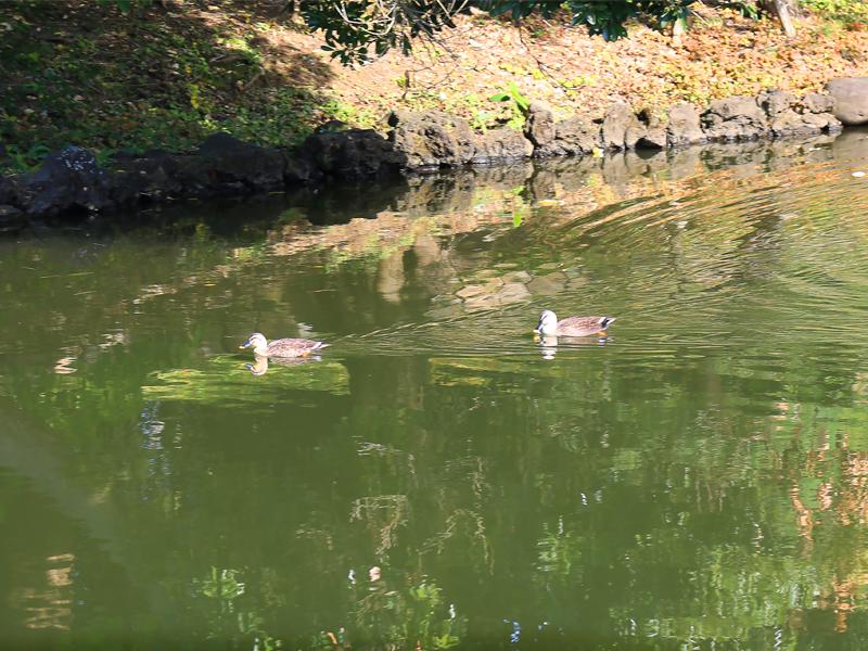 新宿御苑・内藤新宿大宗寺