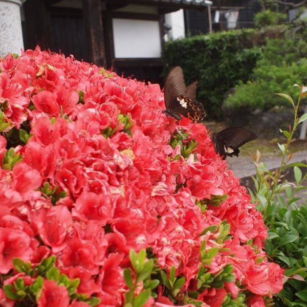 600花と蝶々