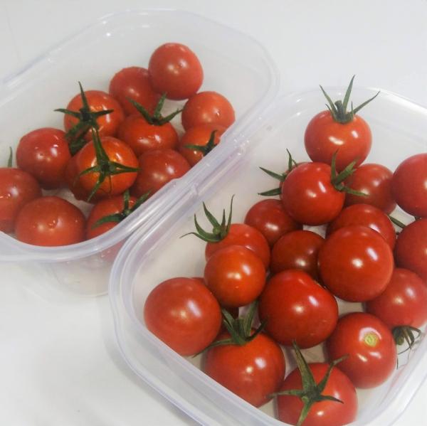 600ミニトマト200726