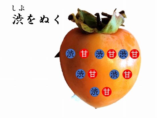 160オンライン坐禅会 法話 子供向け 渋柿4