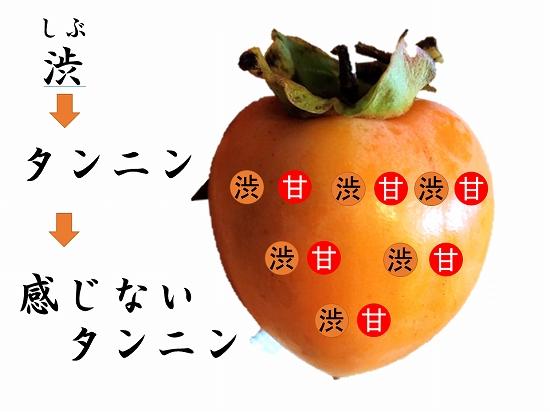 160オンライン坐禅会 法話 子供向け 渋柿7