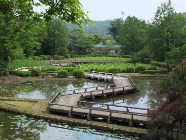 6薬師池公園0523