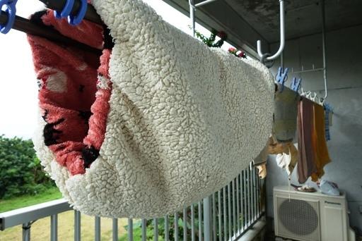 猫洗a DSC02232