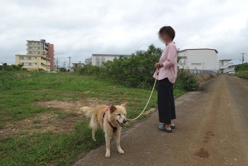 散歩a DSC02294