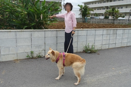 散歩b DSC02291