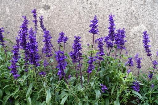 紫a DSC02399