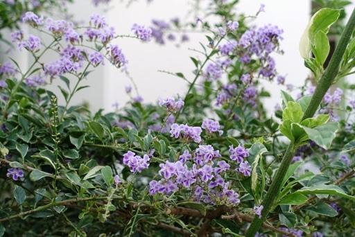 紫b DSC02400