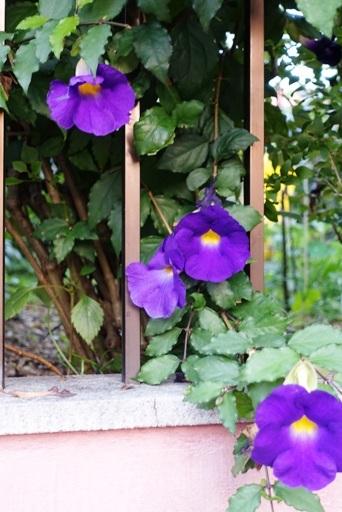 紫c DSC02406