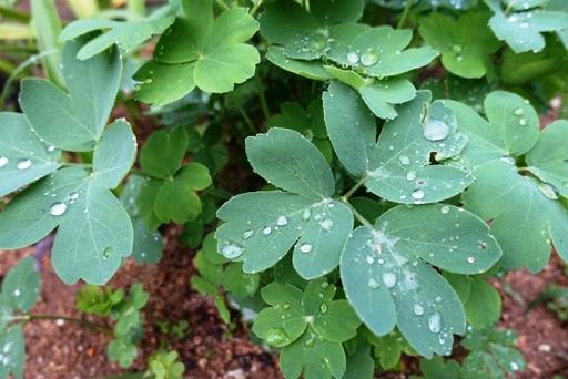 雨a DSC00546