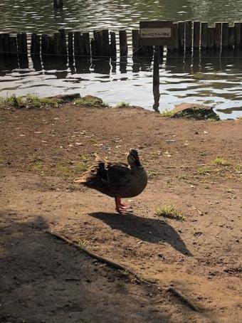 洗足池公園_4