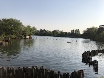 洗足池公園_5