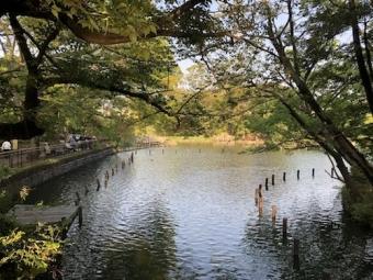 洗足池公園_10