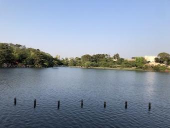 洗足池公園_16